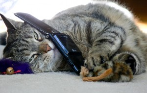 cat-on-the-phone_thanks_jill